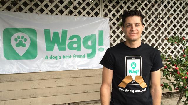 Los Angeles, Hyde Park Dog Walker and Dog Sitter 7