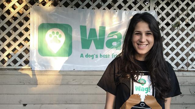 Los Angeles, Echo Park Dog Walker and Dog Sitter 5