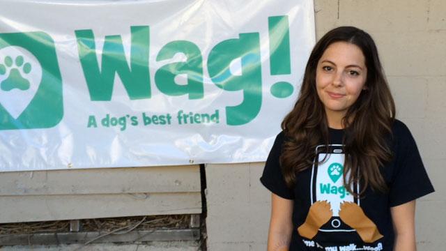 Los Angeles, Sawtelle Dog Walker and Dog Sitter 5