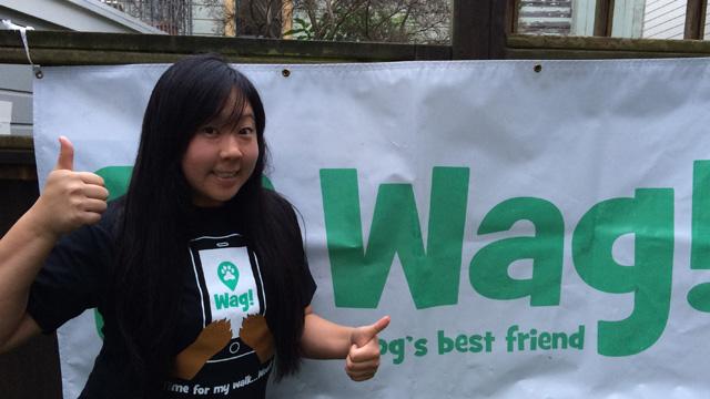 San Francisco, Presidio Dog Walker and Dog Sitter 8