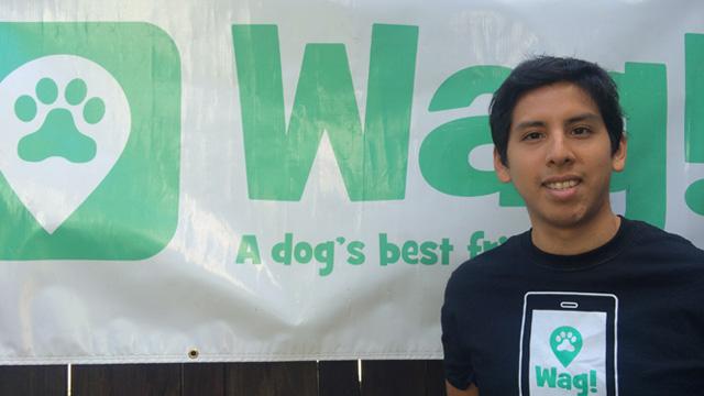 San Francisco, Japantown Dog Walker and Dog Sitter 6