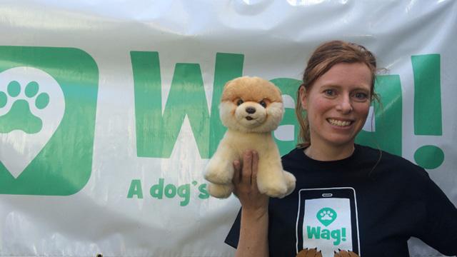 San Francisco, North Beach Dog Walker and Dog Sitter 1