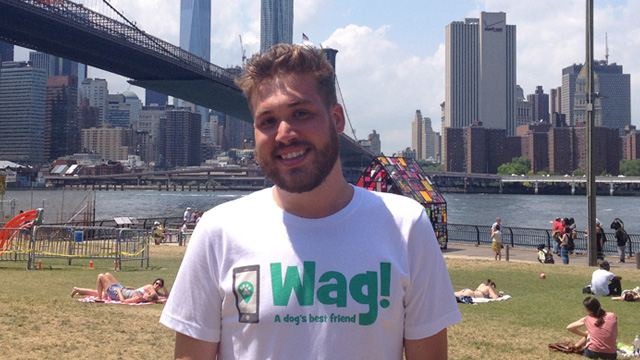 Brooklyn, Greenpoint Dog Walker and Dog Sitter 1