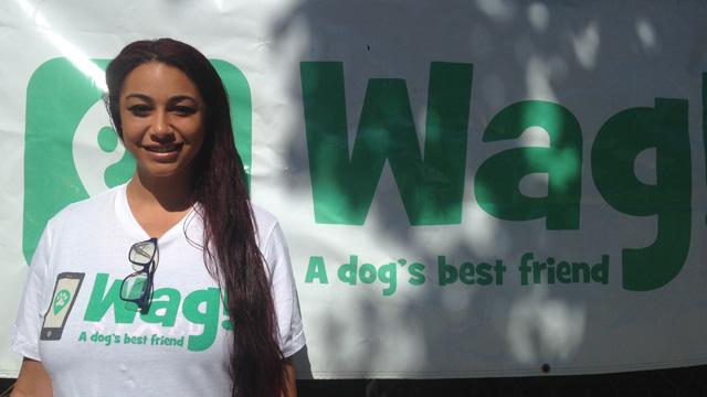 San Francisco, Marina District Dog Walker and Dog Sitter 5