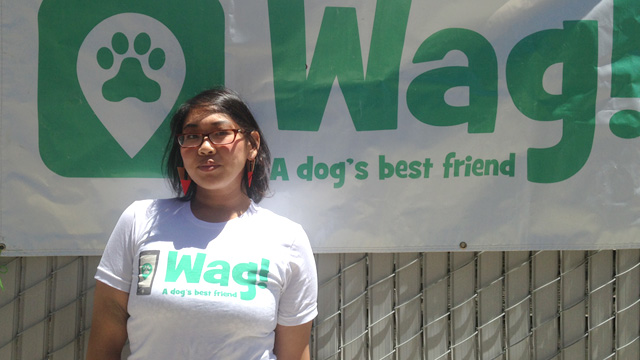 SF, Outer Sunset Dog Walker and Dog Sitter 9