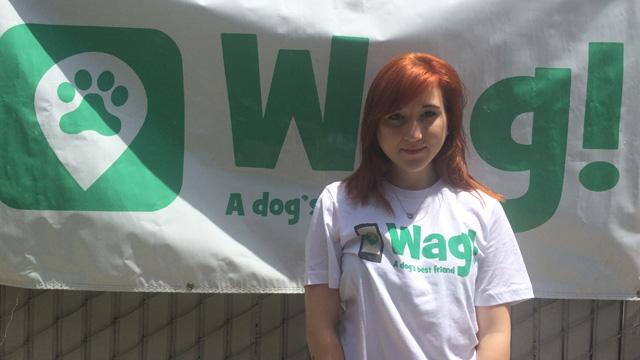 San Francisco, Presidio Dog Walker and Dog Sitter 6