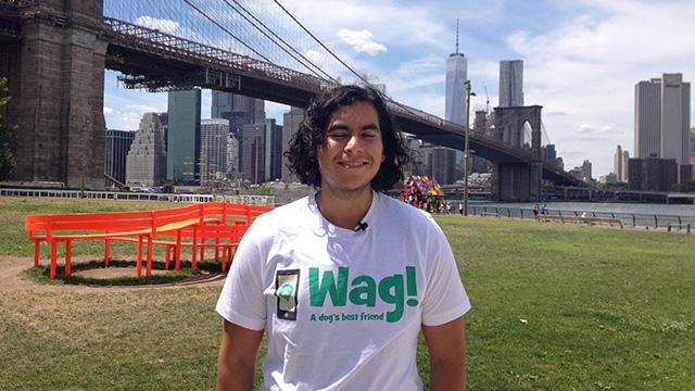 Manhattan, West Village Dog Walker and Dog Sitter 7