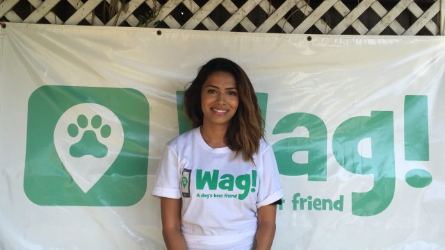 Los Angeles, Pico-Union Dog Walker and Dog Sitter 6