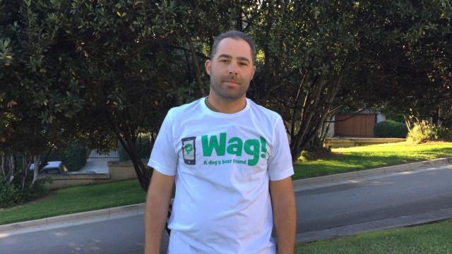 Los Angeles, City West Dog Walker and Dog Sitter 7