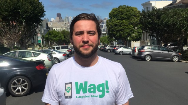 San Francisco, Pacific Heights Dog Walker and Dog Sitter 8