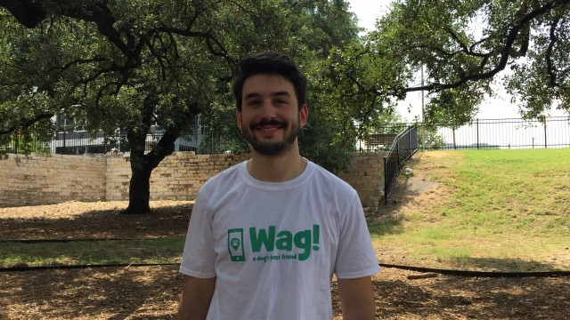 Austin, Brentwood Dog Walker and Dog Sitter 3